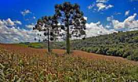 Sarandi - Milharal-Foto:Claudio de Taunay