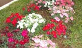 Selbach - canteiro florido Avenida Jacuí, Por Sady Afonso Junges