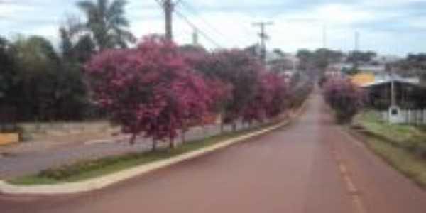 Arborização Florística na Avenida Jacuí, Por Sady Afonso Junges