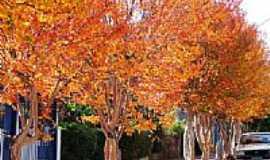 Sobradinho - Outono em Sobradinho-Foto: Alexandre Otavio Pinto