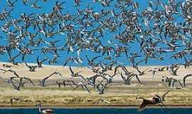 Tavares - Tavares-RS-Flamingos na Lagoa do Peixe-Foto:Renato Grimm