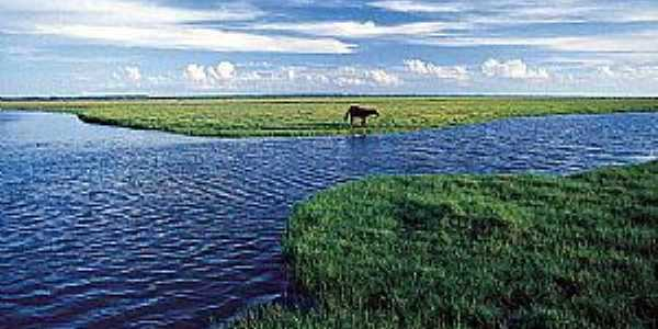Tavares-RS-Parque Nacional Lagoa do Peixe-Foto:NEDE LOSINA