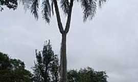 Tiradentes do Sul - Coqueiro com forquilha-Foto:Laercio.W
