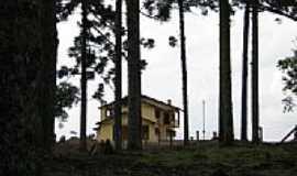 Três Arroios - Casa entre Pinheiros-Foto:berdam