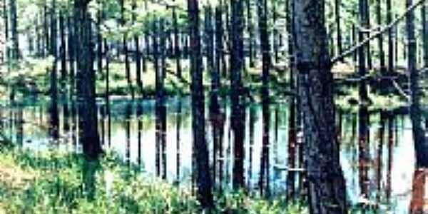 Lagoa da Cerquinha-