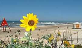 Xangri-Lá - Xangri-Lá-RS-Girassóis à beira mar-Foto:Susy Dienstbach