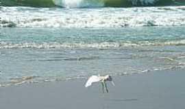 Xangri-Lá - Xangri-Lá-RS-O pouso da garça na praia-Foto:Susy Dienstbach