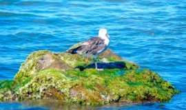 Barra Velha - A Ilha, Por Lincoln Rodrigo