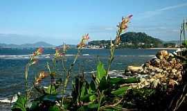 Barra Velha - Barra Velha-SC-Flores na praia-Foto:Valmice Vieira