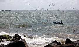 Barra Velha - Barra Velha-SC-Pesca artesanal e as gaivotas-Foto:Jakson Santos