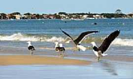 Bombinhas - Pássaros na Praia de Zimbros em Bombinhas-SC-Foto:Wolfgang Wodeck