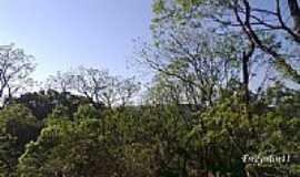 Chapecó - Floresta em Chapecó-Foto:fredysilva11