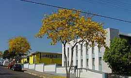 Curitibanos - Curitibanos-SC-Ipê amarelo em frente ao Fórum-Foto:Wolney Cesar Felipe