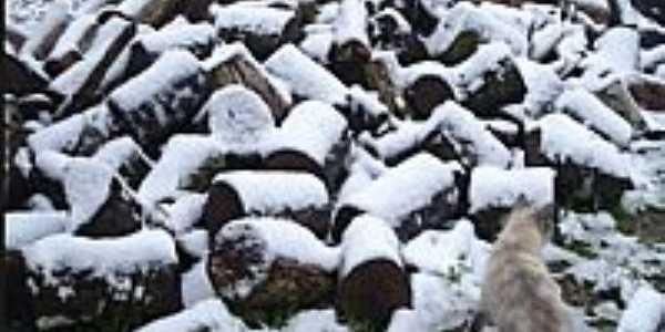 Troncos cobertos de neve no dia 23/07/2013 em Doutor Pedrinho-SC-Foto:Dalila Girelli