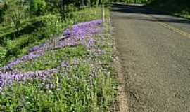Engenho Velho - Flores na Estrada de Engenho Velho-Foto:Evandrinho_Falabrett…