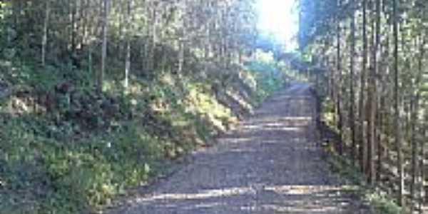 Estrada arborizada-Foto: Yatri Berti