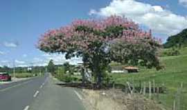 Laurentino - Rodovia Primavera-Foto:Angelo Ronchi