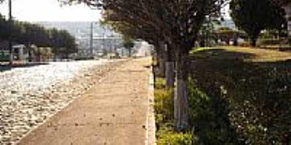 Avenida arborizada em Lebon Régis-Foto:Eduardo Pierdoná