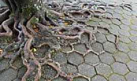 Nova Trento - A Natureza se imp�e em Nova Trento-SC-Foto:Sandro Salomon