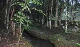 Passos Maia - Córrego em mio ao Bosque em Passos Maia-SC-Foto:CLEVIS EVANGELISTA