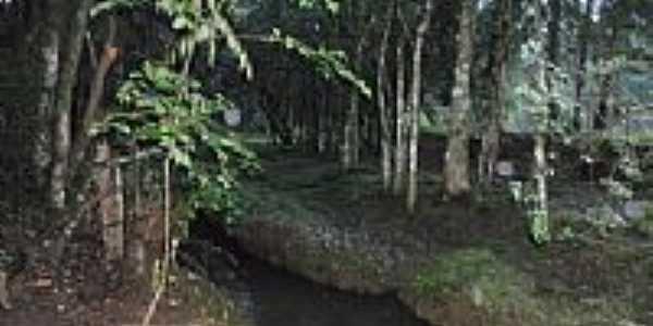 Córrego em mio ao Bosque em Passos Maia-SC-Foto:CLEVIS EVANGELISTA