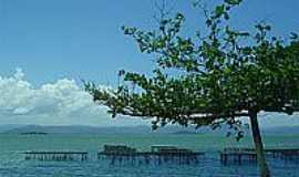 Ribeirão da Ilha - A árvore e o mar