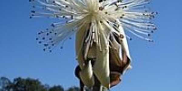 Flor desconhecida no Zoológico-Foto:J. Carlos de Carvalh…