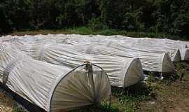 Taquaras - Taquaras-SC-Estufas para cultivo de Morango-Foto:Eber Beck