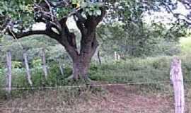 Nossa Senhora da Glória - Umbuzeiro-Foto:oliveice