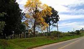 Siriri - Siriri-SE-Ipê amarelo na beira da Rodovia-Foto:joel felix