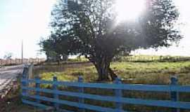 Telha - Área rural em Telha-Foto:NILMAIA