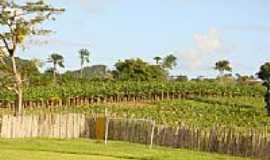 Onha - Plantação de Bananas-Foto:James Braga