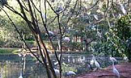 Americana - Americana-SP-Aves no Parque Ecológico Zoo-Foto:Alexandre Chieus