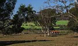Américo Brasiliense - Zona rural de Américo Brasiliense-Foto:gustavo_asciutti