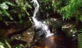Angatuba - po�o das antas (florestal), Por BRUNO APUS CEPHEUS CAMARGO