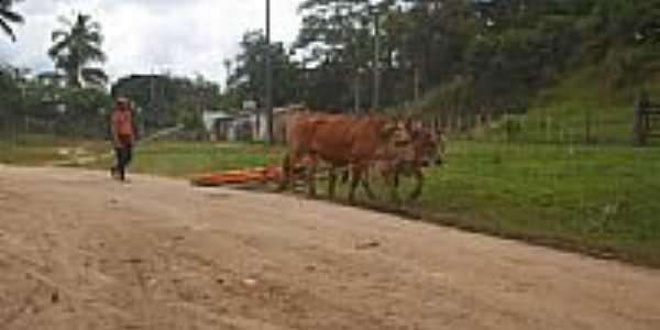 O carreador em Ouricana-Foto:abias francisco de s…