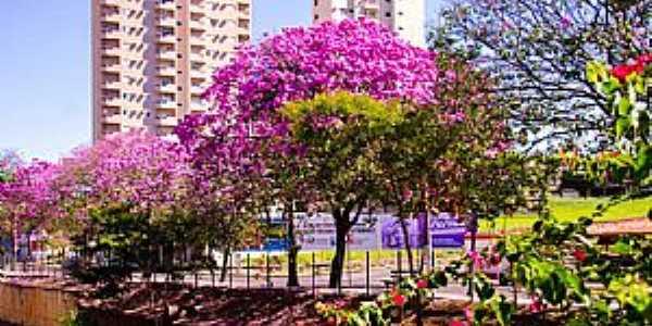 Araçatuba - SP