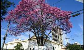 Araraquara - Avenida Duque de Caxias com Rua Padre Duarte - Centro Foto de Nicole Cristine