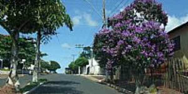 Quaresmeira na Avenida de Ava�-Foto:Minduim