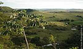 Avencas - Fazenda Flor Roxa-Foto:Ivan evangelista Jr