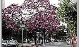Barão de Geraldo - Avenida-Foto:_vi_