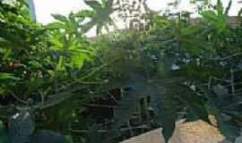 Paiol - Paiol-BA-Vegetação da Escola-Foto:lianamorisco.blogspot.com.br