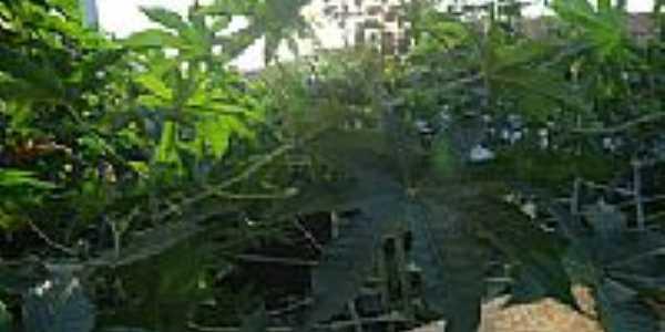Paiol-BA-Vegetação da Escola-Foto:lianamorisco.blogspot.com.br