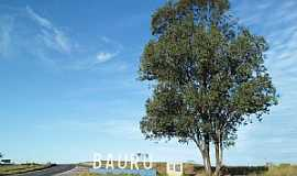 Bauru - Bauru-SP-Linda árvore na entrada da cidade-Foto:eduardo bauru