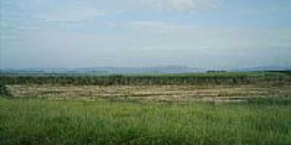 Plantação-Foto:Ili Mitai