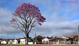 Cerqueira C�sar - O suntuoso Ip� roxo em Cerqueira Cesar-Foto:fotomarco3d