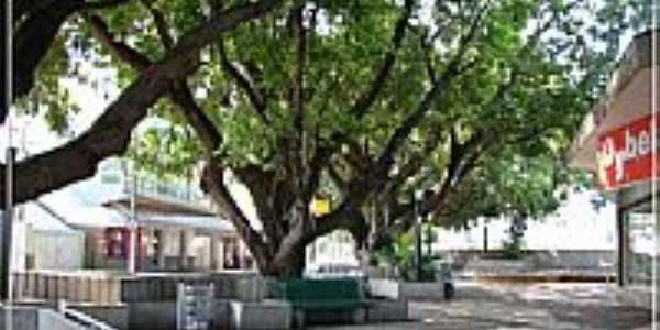 Cerquilho-SP-Rua Dr.Soares Hungria-Foto:Fábio Barros