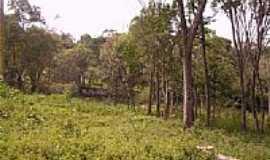Cipó-Guaçu - Chácara das Ameixeiras-Foto:danilosilva1610