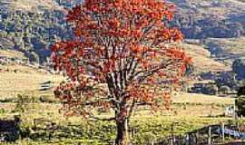 Divinolândia - Muxoqueiro, conhecida também por Mulungú por Altamiro O. Cristo