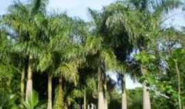 Dolcinópolis - palmeira imperial, Por José Arruda (mineiro )